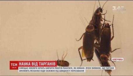 Немецкие зоологи хотят научить роботов двигаться, как тараканы