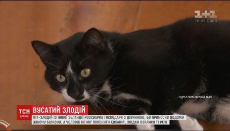 В Новой Зеландии кот чуть не поссорил влюбленных украденным нижним бельем