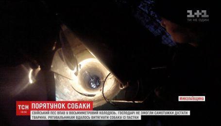На Николаевщине собака упала в 8-метровый колодец с водой