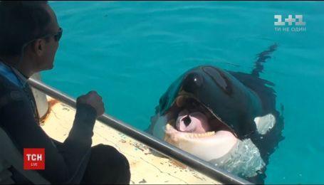 Во французском океанариуме касатка научилась говорить короткие слова