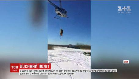 В США лосей перевозили на вертолете в специальном креплении