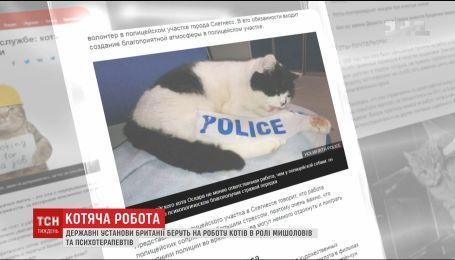 Мишолов та поліцейський: у світі збільшується кількість котів, яких офіційно взяли на роботу