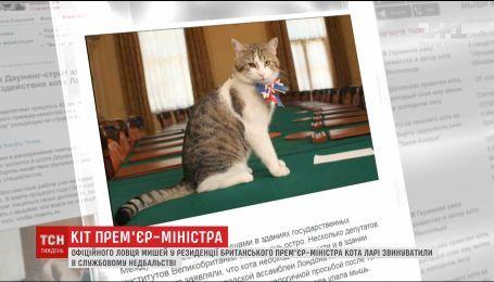 Известного кота британских премьеров обвиняют в играх с мышами, вместо охоты