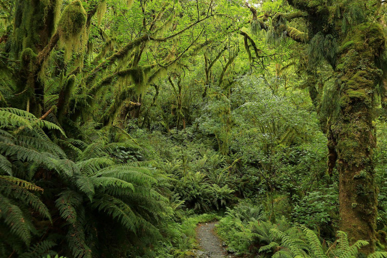 Нова Зеландія, Фіордленд, парк, ліс, турист_2