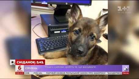 Полиция Шотландии показала своих сотрудников-щенков