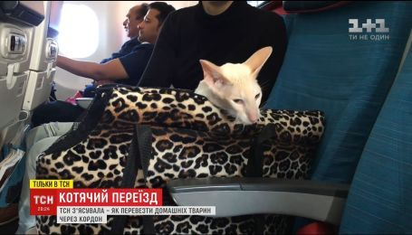 Кошачья путешествие: как помочь домашним животным пережить многочасовой перелет