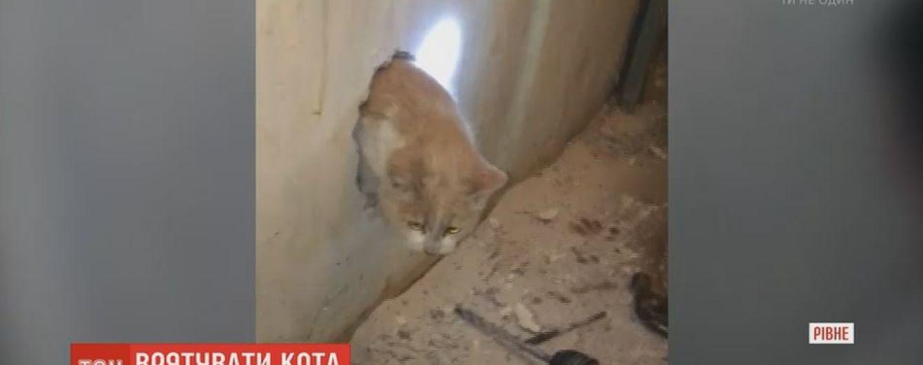 У Рівному дві доби тривав порятунок кота з вентиляційної шахти багатоповерхівки