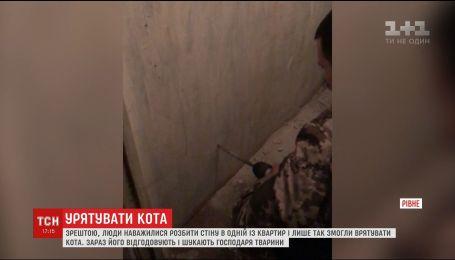 Жители квартиры в Ровно согласились пробить стену, чтобы спасти кота