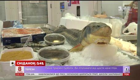 Як вибрати якісну рибу за помірну ціну