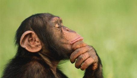 Мавпи розумніші за людей