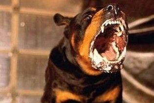 У Києві оператора центрального телеканалу загризла зграя собак