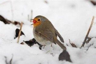 Погода в Україні на неділю, 10 січня