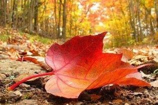 Українців оштрафують за спалювання опалого листя