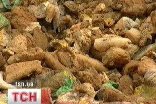 У Дніпропетровську на смітник викинули кілька тонн хліба