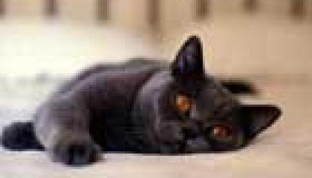 Вакцинація котів