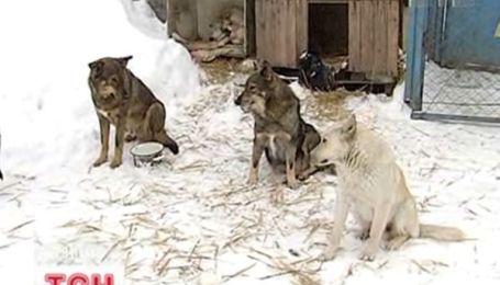 У Пироговому безпритульні собаки мерзнуть без електрики