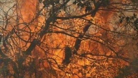 Ліс на Херсонщині продовжує горіти