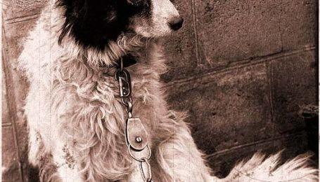 Бездомних собак стерилізуватимуть