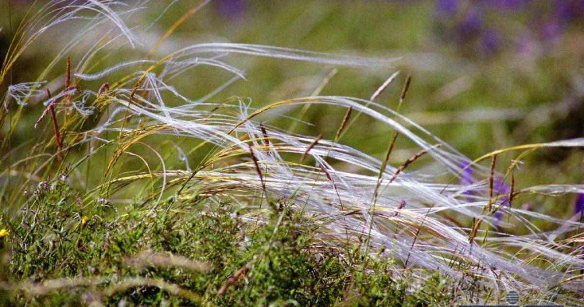 В теплый сезон степь меняет свой окрас, как кокетливая женщина @ УНІАН
