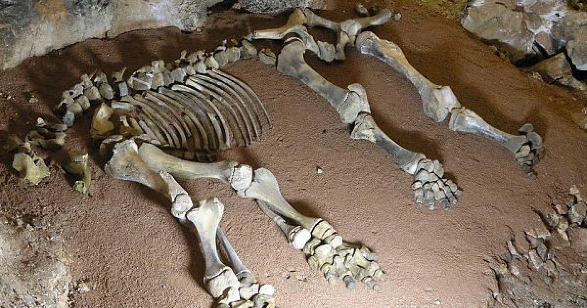 В пещере покоятся кости мамонтенка @ waking-up.org