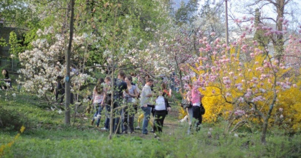 Ботанічний сад зачаровує відвідувачів квітучими магноліями @ Сегодня/Сергій Ус