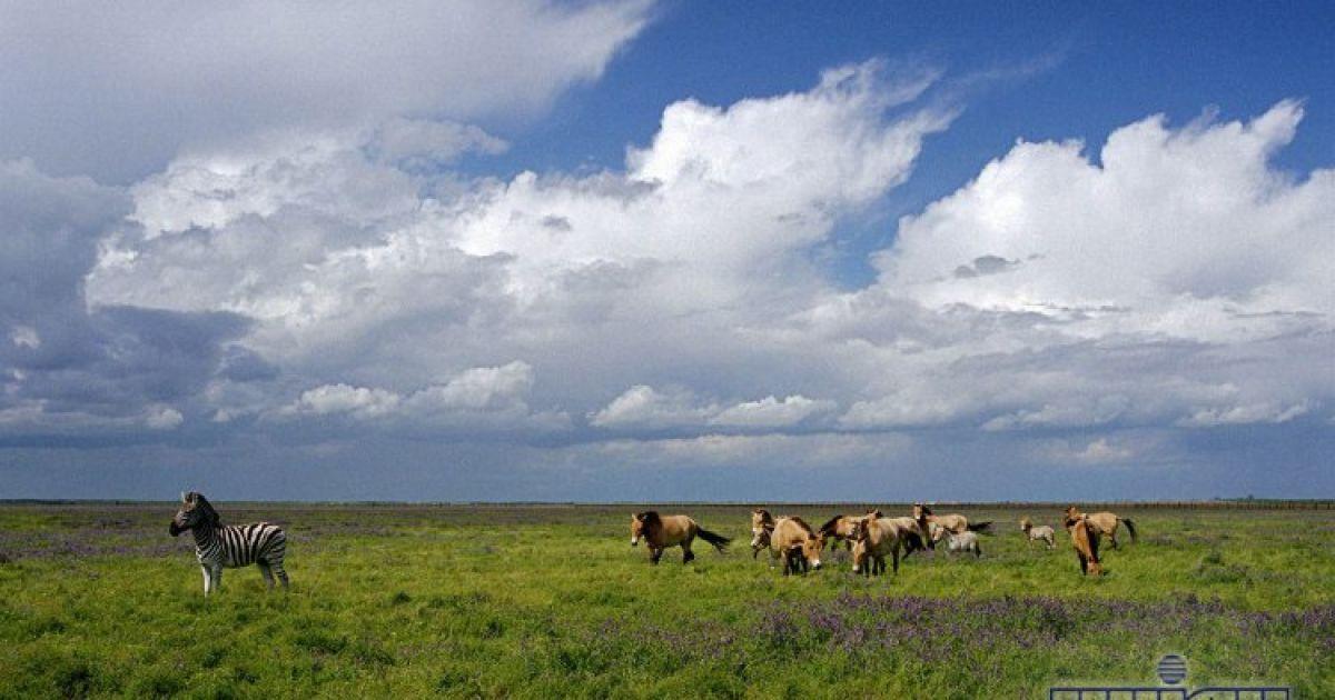 Заповедник населяют животные с разных континентов @ УНІАН