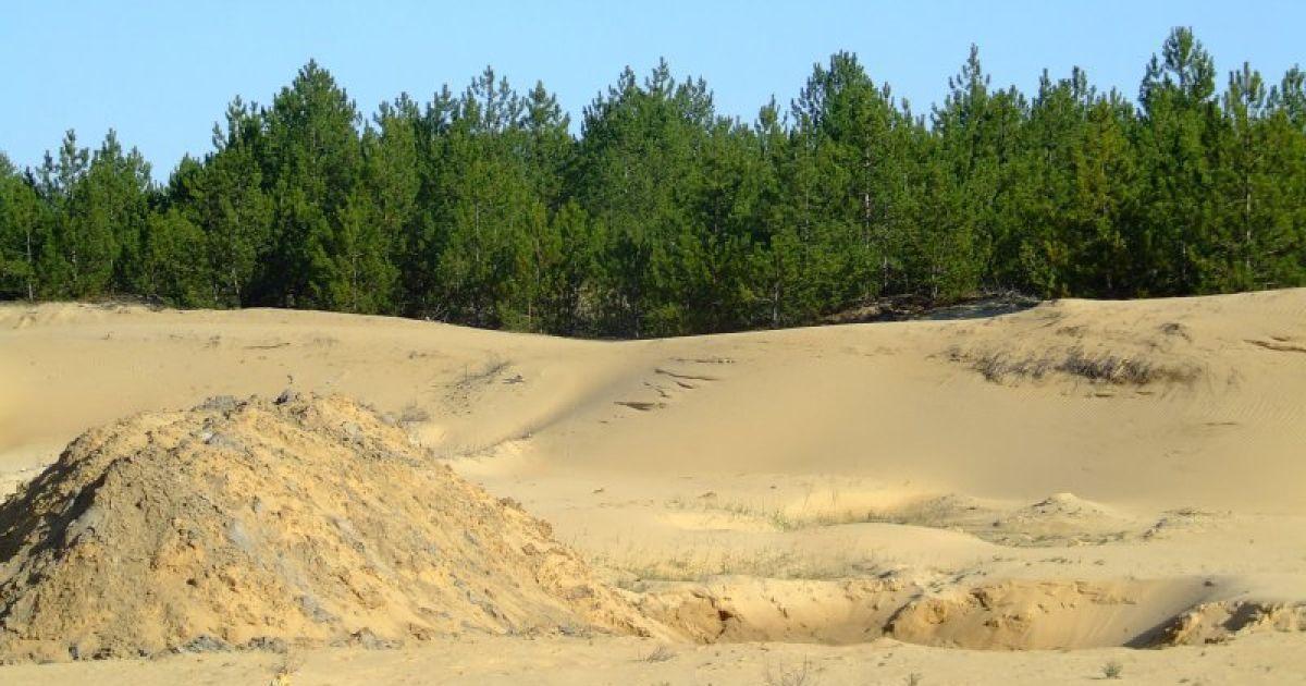 Лесные насаждения сумели остановить пустыню @ robinzon.ks.ua