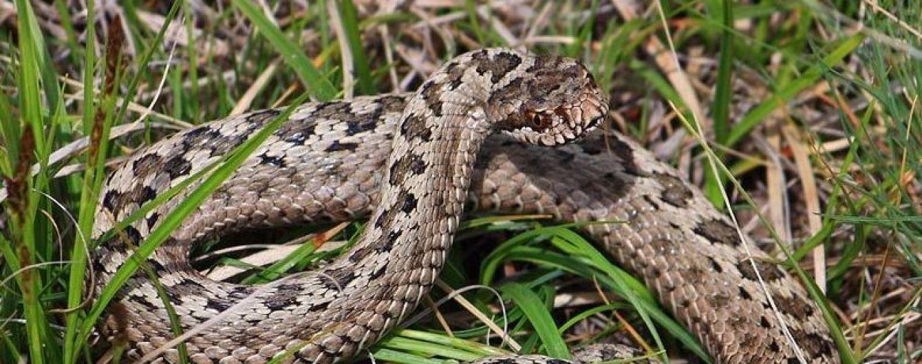 Во Львовской области парень попал в реанимацию из-за укуса змеи