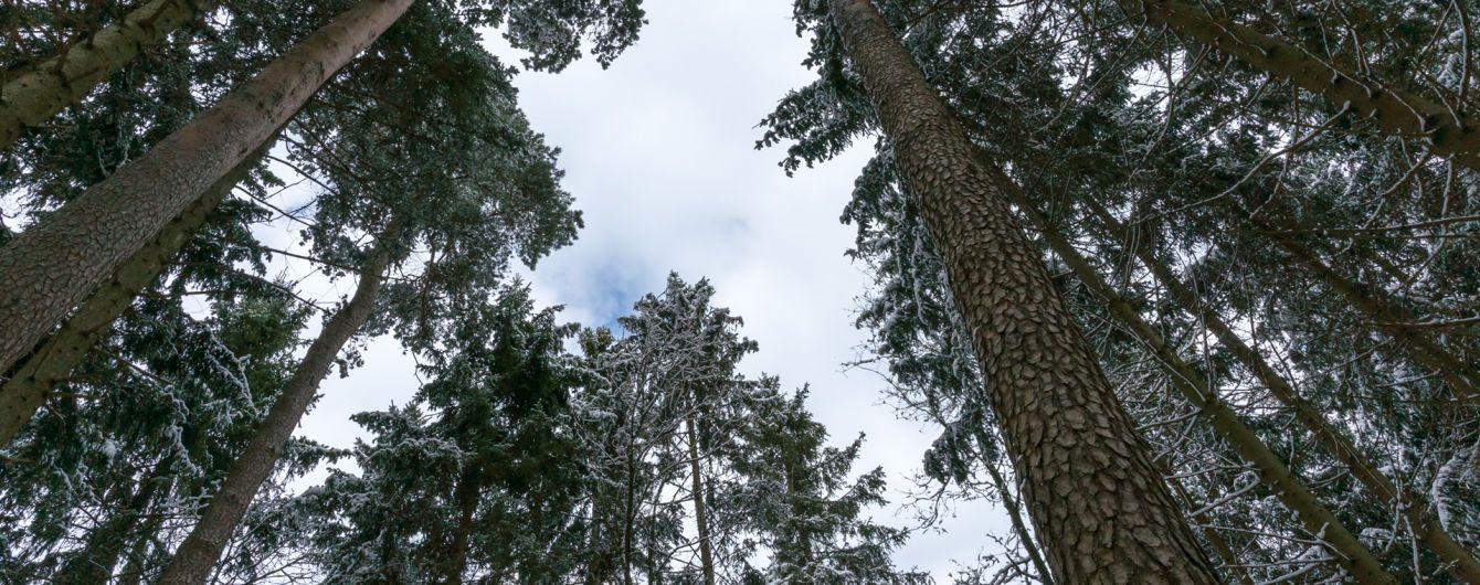 В лісі на Тернопільщині на смерть замерзли мати з сином