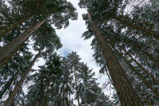 В лесу на Тернопольщине насмерть замерзли мать с сыном