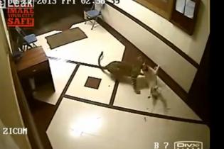 В Індії леопард пробрався в житловий будинок і без проблем вбив собаку (відео)