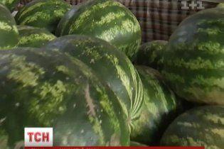 """Спеціалісти розповіли, як українцям врятувати здоров'я від """"хімічних"""" кавунів та динь"""