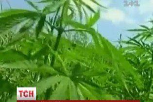 """В Украине можно абсолютно легально купить семена конопли, хотя за ее выращивание """"светит"""" криминал"""