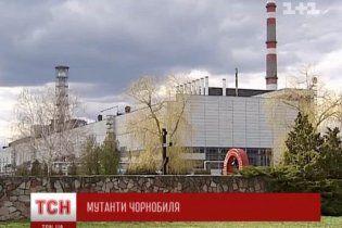 """Американские ученые нашли в Чернобыле """"танцующие"""" деревья-мутанты"""