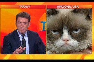 """Сердитий кіт довів телеведучого до реготу в ході """"інтерв'ю"""""""