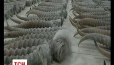 У Китаї затримали гігантську партію рідкісної контрабанди