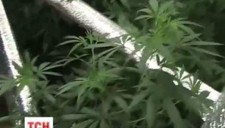 В Чернігові агроном-любитель зробив з оселі термос, щоб вирощувати коноплю