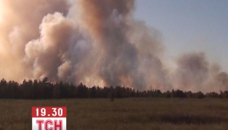 Полгектара леса выгорело в Херсонской области