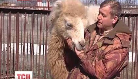 В Крыму верблюдица-блондинка празднует день рождения