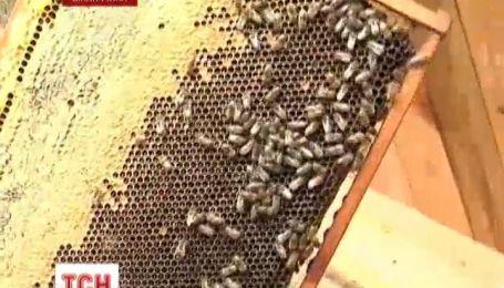 В Винницкой области пасечники подают в суд из-за пчел