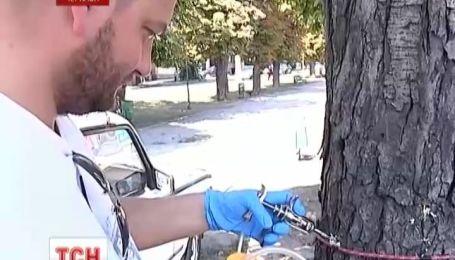 В Черкассах поляки спасают деревья от каштановой моли