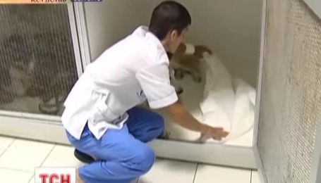 В Киеве собаке сделали пластическую операцию