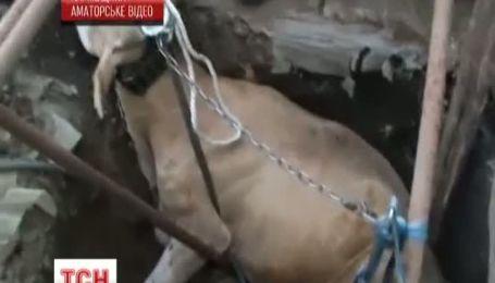 На Харківщині врятували корову, яка впала у чотириметровий колодязь