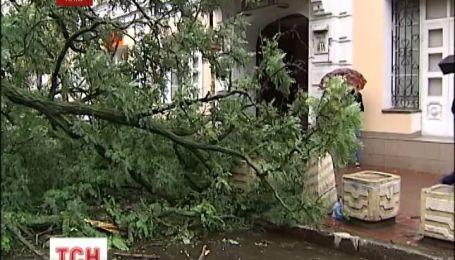 Движение в центре Киева парализовало упавшее дерево
