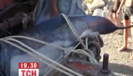 У Криму вбили дельфіна