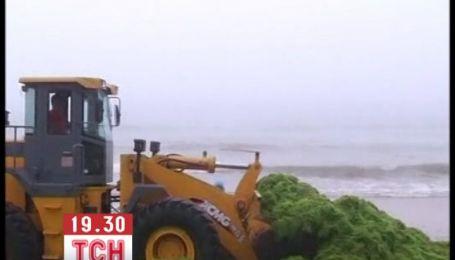 Тонны зеленых водорослей заблокировали пляже Китая