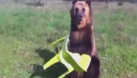 Медведь поразил YouTube танцами и игрой на трубе