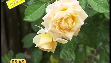 За квіти на перше вересня можна викласти більше 500 грн