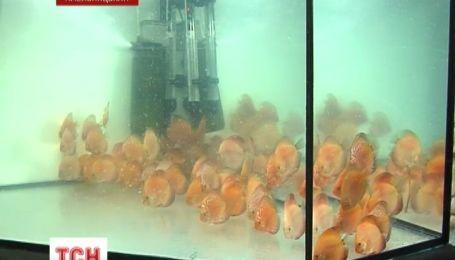 В Хмельницькому продемонстрували рідкісних рибок