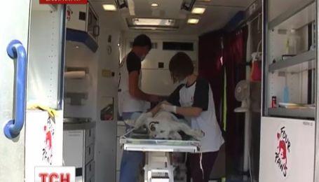 В Ужгороді міжнародна організація стерилізує безпритульних собак